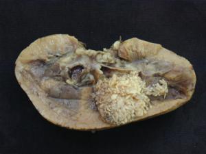 diagnostico-macroscopico-foro24